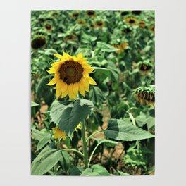 Flower No 6 Poster