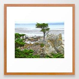 Lone Cypress Framed Art Print