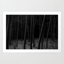 silent woods Art Print
