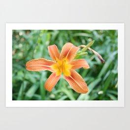 orange garden flower Art Print