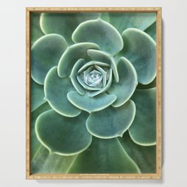 Diamond Succulent Serving Tray