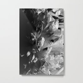 flower close up - black/white - twelve Metal Print