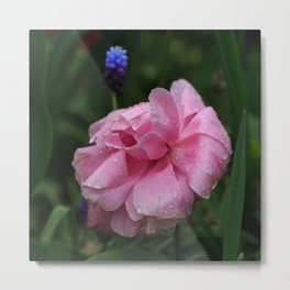 Ranunculus In The Rain Metal Print