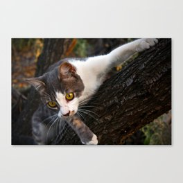 Cat on the Tree Canvas Print