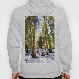 Trees Hoody