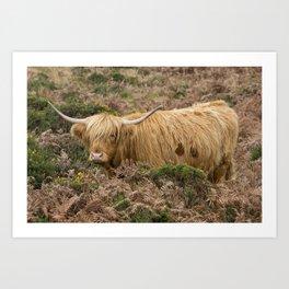 Highland Lad Art Print