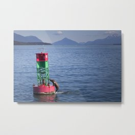 Playful seals resting on a buoy Metal Print