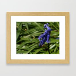 Florals and Insect Framed Art Print
