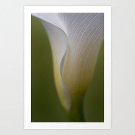 A Flower Waiting Art Print