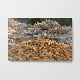 Sweet Corn and Husks Metal Print