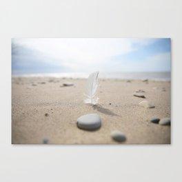 Beach feather Canvas Print