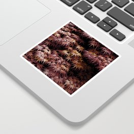 Japanese Maple, Acer Palmatum Seigen Sticker