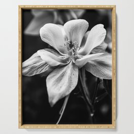 Columbine in Gray -- Colorado State Flower. Serving Tray