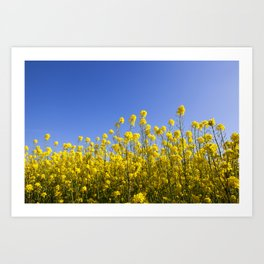 Blossoming agricultural field Art Print