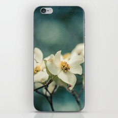 Spring Botanical -- White Dogwood Branch in Flower iPhone & iPod Skin