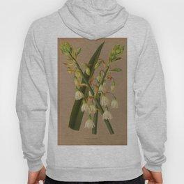Aendsen, Arentine H. (1836-1915) - Haarlem's Flora 1872 - Hyacinthus Candicans Hoody