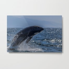 Orca Breach Metal Print