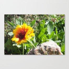 Sunshine Flower Canvas Print