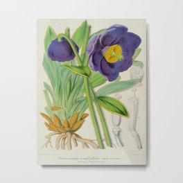 Meconopsis Simplicifolia Vintage Botanical Floral Flower Plant Scientific Metal Print