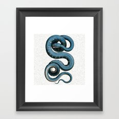 Blue White Vintage Snake Illustration Animal Art Framed Art Print