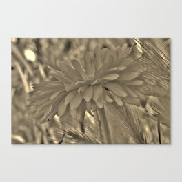 Petals From the Side Canvas Print