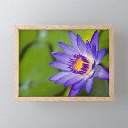 Pūpūkea Garden Breeze Framed Mini Art Print