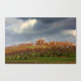 Storm in the orchards  Canvas Print