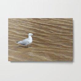 Lone Gull Metal Print