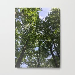 Looking Up Through the Trees Metal Print