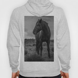 Black Stallion Hoody