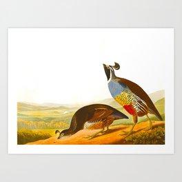 Scientific Bird Illustration Art Print