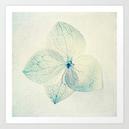 pastel hydrangea Art Print