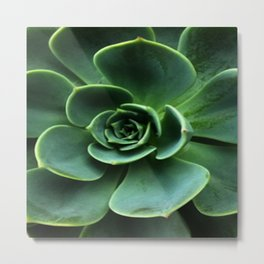 GRAY-GREEN CACTUS SUCCULENT ART Metal Print