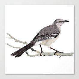 Northern mockingbird - Cenzontle - Mimus polyglottos Canvas Print