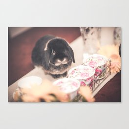 Bunny Morgan with teacups Canvas Print