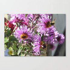 Two Busy Bees on Violet Flowers Canvas Print