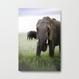 Majestic Elephant at Sunrise Metal Print