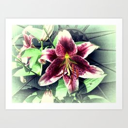 Pink Lily Flower Cottage Chic Modern Country Home Decor A419A Art Print