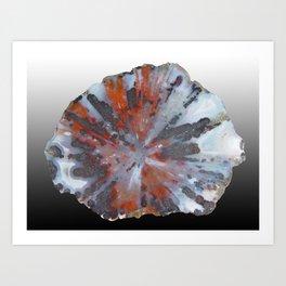 Cady Mountain Aragonite Pseudomorph (Sagenite) Art Print