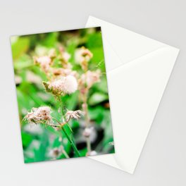Nature photography dandelion II Stationery Cards