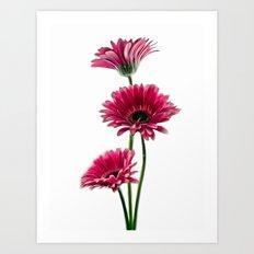 Simply Pink Art Print