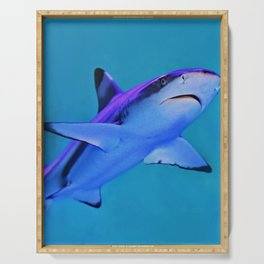Gray and White Shark (Color) Serving Tray