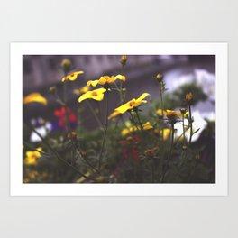 Nature - Wild Yellow Art Print