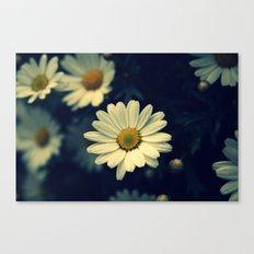 Fresh Daysies flowers 0944 Canvas Print