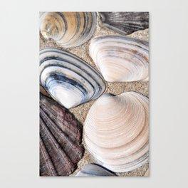 Seashell 2 Canvas Print