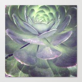 Echeveria succulent digital painting Canvas Print