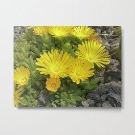 yellow cactus bloom IV Metal Print