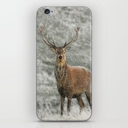 Red Deer Stag in Snow iPhone Skin