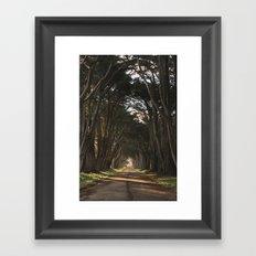 Cypress Tree Tunnel Framed Art Print