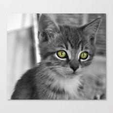 Through the eyes of a kitten Canvas Print